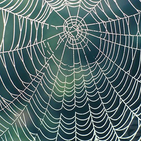 Courses Taught spider, Wisdom in Architecture